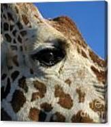 The Giraffe's Eye Canvas Print