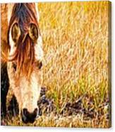Close Up In The Marsh Canvas Print