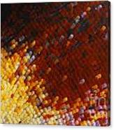 Extreme Close Up Of A Butterfly's Wing Canvas Print