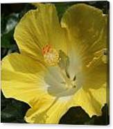 Close Up Of A Hibiscus...   # Canvas Print