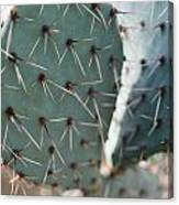 Close-up Of A Prickly Pear Cactus Canvas Print
