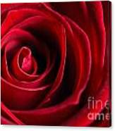 Close Up Of A Red Rose Canvas Print