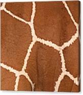 Close-up Of A Reticulated Giraffe Canvas Print
