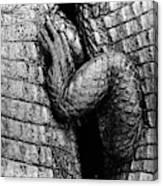 Close Up Of Crocodiles Leg Black Canvas Print