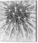 Close-up Of Dandelion Seeds Canvas Print