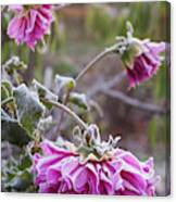 Close-up Of Flowers Covered By Frost Canvas Print