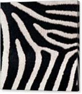 Close-up Of Greveys Zebra Stripes Canvas Print