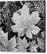 Close Up Of Leaves Canvas Print