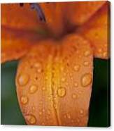 Close-up Of Orange Lily Flower After Canvas Print