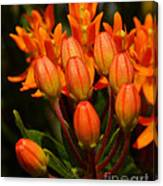 Close-up Of Wildflower Buds Canvas Print