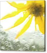Close-up Of Yellow Wildflower In Grand Canvas Print