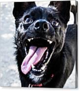 Close-up Shot Of A Little Black Dog - Canvas Print