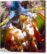 Close-up View Of A Mantis Shrimp Canvas Print
