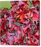 Close View Red Oak Leaves Canvas Print