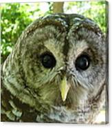 Closeup Of A Barred Owl Canvas Print