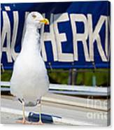 Closeup Of A Seagull On A Fisher Boat  Canvas Print