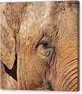 Closeup Of An Elephant Canvas Print
