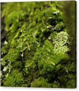 Closeup Of Moss And Lichen. Rhoen Canvas Print
