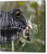 Clothed Toad Canvas Print