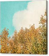 Cloud And Birches Canvas Print
