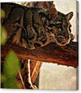 Clouded Leopard II Painted Version Canvas Print