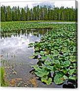 Clouds Among The Lily Pads In Swan Lake In Grand Teton National Park-wyoming  Canvas Print