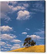 Clouds Over Lone Tree Canvas Print