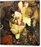 Clown Anglerfisch Canvas Print