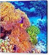 Clown Fish In Coral Garden Canvas Print