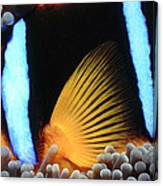 Clownfish 1 Canvas Print