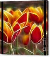 Cluisiana Tulips Triptych  Canvas Print