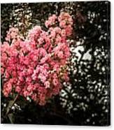 Clump Of Flowers Canvas Print