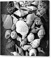 Cluster Of Shells Canvas Print