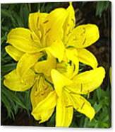 Cluster Of Yellow Lilly Flowers In The Garden Canvas Print