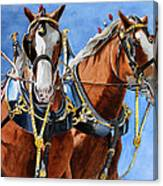 Clydesdale Duo Canvas Print