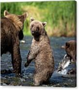 Coastal Brown Bear Family Canvas Print