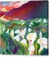 Coastal Callas Canvas Print