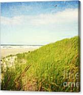 Coastal Dunes Canvas Print