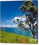 Coastal Farmland Landscape With Pohutukawa Tree Canvas Print