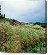 Coastal Flora, Oregon Canvas Print