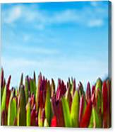 Coastal Ice Plant Canvas Print