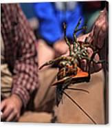 Coastal Maine Is Lobster Canvas Print