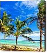 Coastal Palm Trees Canvas Print