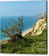 Coastal Path - West Bay To Eype  Canvas Print