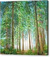 Coastal Redwoods Canvas Print