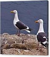 Coastal Seagulls Canvas Print