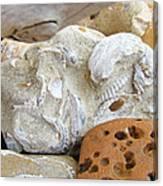 Coastal Shell Fossil Art Prints Rocks Beach Canvas Print