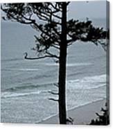 Coastal Tree Canvas Print