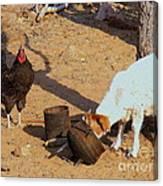 Cock N Goat Canvas Print