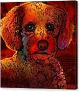 Cockapoo Dog Canvas Print